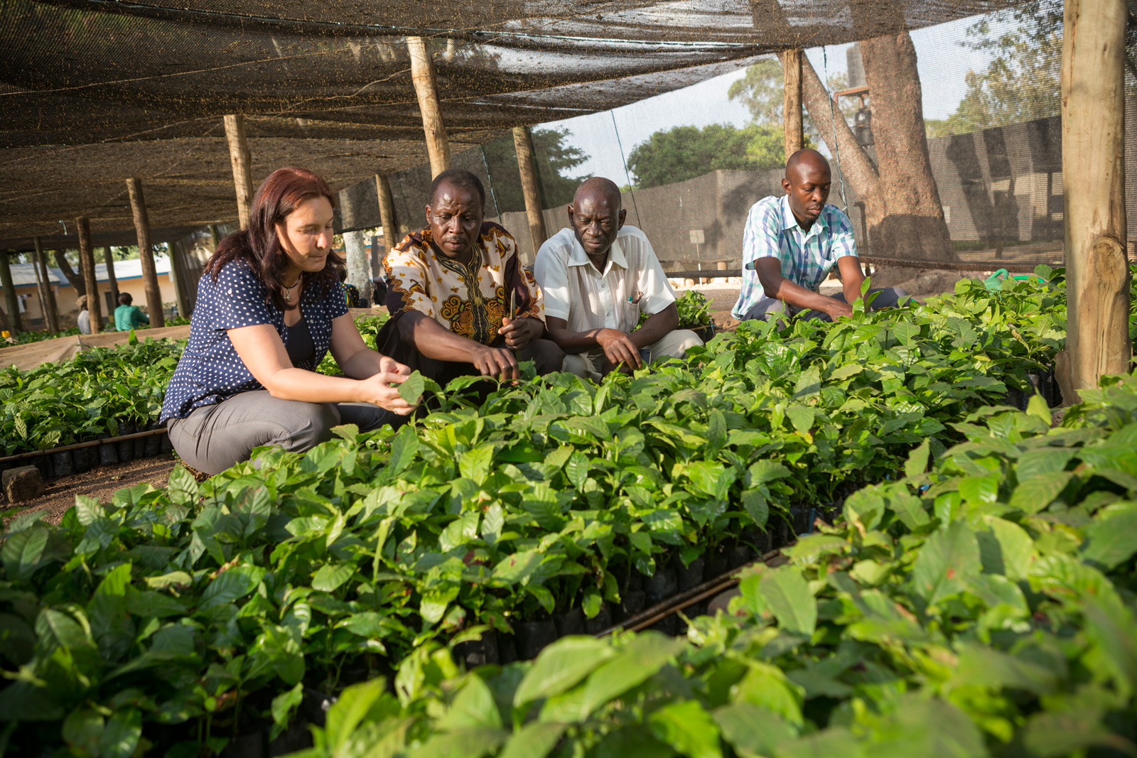 ED&F Man careers - ED&F Man agronomist and workers at a coffee plantation in Uganda