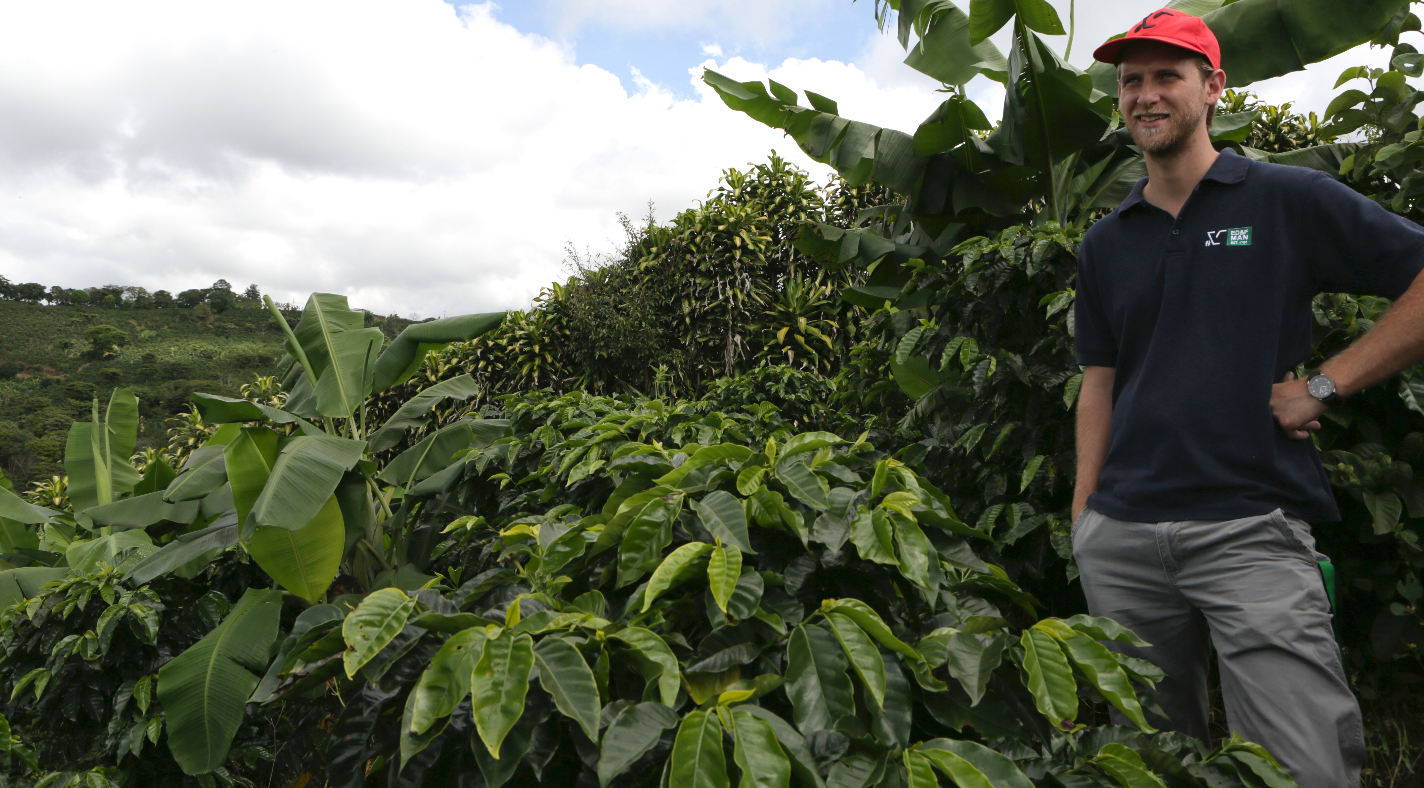 Employee in coffee field, Costa Rica